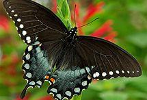 Lepke/Butterfly