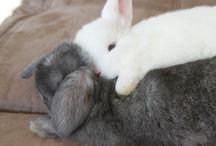 RABBIT / Coniglietti e Loro Amici : situazioni varie.