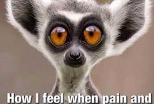 Chronic Pain Humor