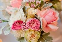 Pretty Petals / by Sarah Cheetham