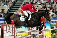 Equestrain - showjumping