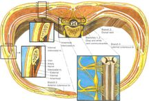 Intercostal Nerve Block