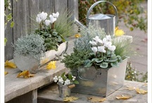 CONTAINER GARDENING / by Sheryl Rootenberg Westerman