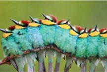 Aves / Los #animales son nuestra pasión y las #aves aún más Colaboran en muchas de nuestras #actividades y #experiencias http://www.vidasalvaje.net/