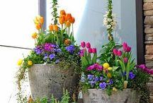 ghivece - jardiniere