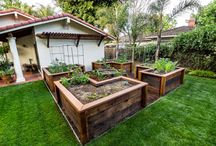 raised vege beds / by Francine Valencia Haug