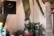 large plant room divider