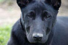 Chiens à adopter / Voici toutes les photos des chiens à la recherche d'une nouvelle famille.