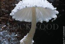 Huby - fungi