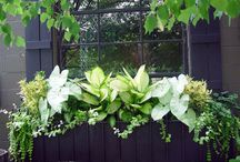 Gardening Ideas and Spots / by Cathy Kleiman