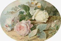 Roses / fiori