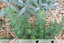 desert gardening / desert plantings