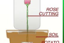 how to propagate flowers