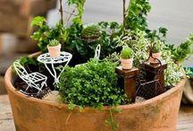 Ogródek w doniczce