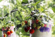 gardening the cool way