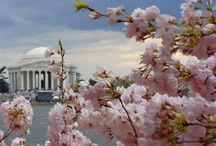 Washington D.C. (aka? America's Scrapbook!) / Our Nation's Capital!  Smithsonian Museums Galore, Monuments and Memorials, Home of our Government, I could go on and on.  It's a staple trip, you MUST go, so let us do the planning! / by Educational Travel Adventures