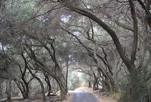 My Crete