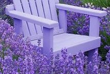Simply Lavender / All things lavender!