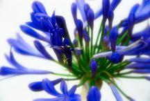 цветочное...