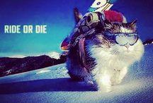 Snowboardlove