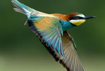 Just beautiful and colours
