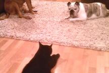 My animals having their meetings... / by Lauren Petrus Marshall