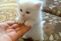 Cute cats / Funny
