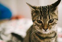Stresse pour chat