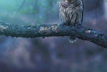OWLS FOREVER