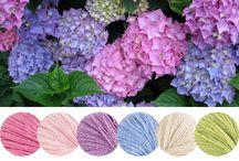 Yarn Color Combo