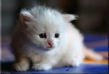 Cute animals / I love all kind of animals! I think animals are the greatest gift to mankind!