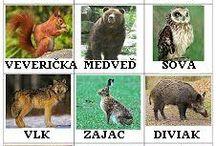 Zvieratká / Domáce aj vonkajšie zvieratká.