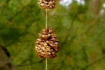 Bird feeders / Bird feeders