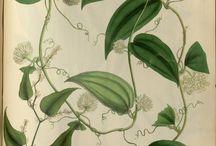 I'm botanically drawn, to these...