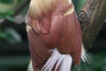 PHOTOS d'oiseaux