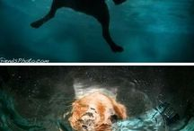 Podvodní fotografie