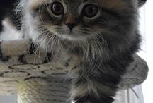 Flauschige Kätzchen