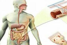 Καθαρίστε τα έντερα από τις τοξίνες