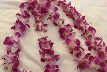 Aloha Hawaii Designed