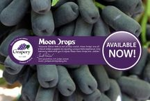 Moon Drops / Our uniquely shaped black grape with out of this world flavor.
