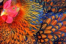 God's Most Colorful Creatures / by Lana Bateman