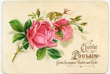 Inspiration: Roses / A rose collection.