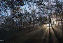 Meraviglie del bosco e sottobosco. / Elementi della natura