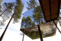 Tree House & Hotels