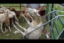 Inglenook Farm Gals