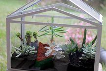 Skleníčky | Small greenhouse