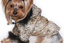 2014-es Yorktrend Kutya télikabát kollekció / Bélelt kutya télikabátok Yorkshire terriereknek tervezve. Európai minőség, nagy választék, lányos szoknyás és vagány fiús modellek, sportos és elegáns télikabátok egyaránt vannak választékunkban. A kapucnis kutyakabátok kapucnija állítható bőségű, és a lecsatolható. A bélések puha pamutból, vagy steppelt bélésanyagból készültek, hogy ne csak csinos, de igazán meleg viseletek legyenek a téli hidegben.