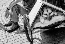 Projet 6 : Sans Domicile Fixe / by Association Abbeville Créations