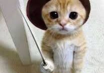 ♥ Kitties ♥