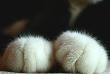 cats and dogs / by Deborah